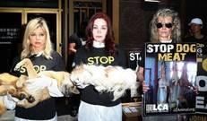 초복에 미국서 '개고기 식용반대' 외친 할리우드 스타들