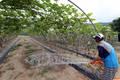 정부, 폭염피해 농가 복구비 신속 지급…필요시 예비비 투입