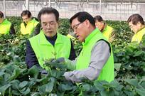 [뉴스텔링] 닻올린 '이성희號 농협'…취임식 대신 딸기농가로